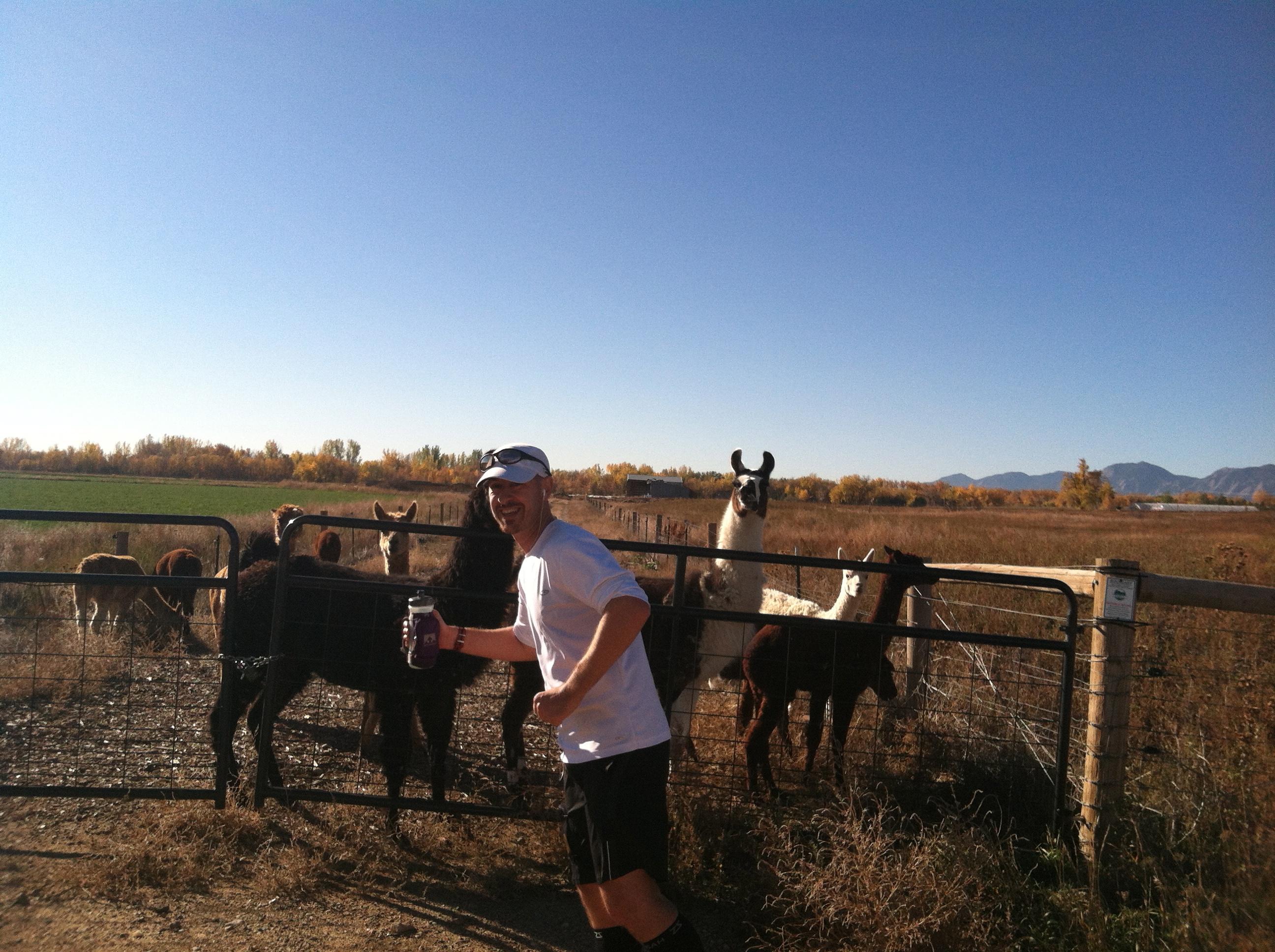 Running with llamas
