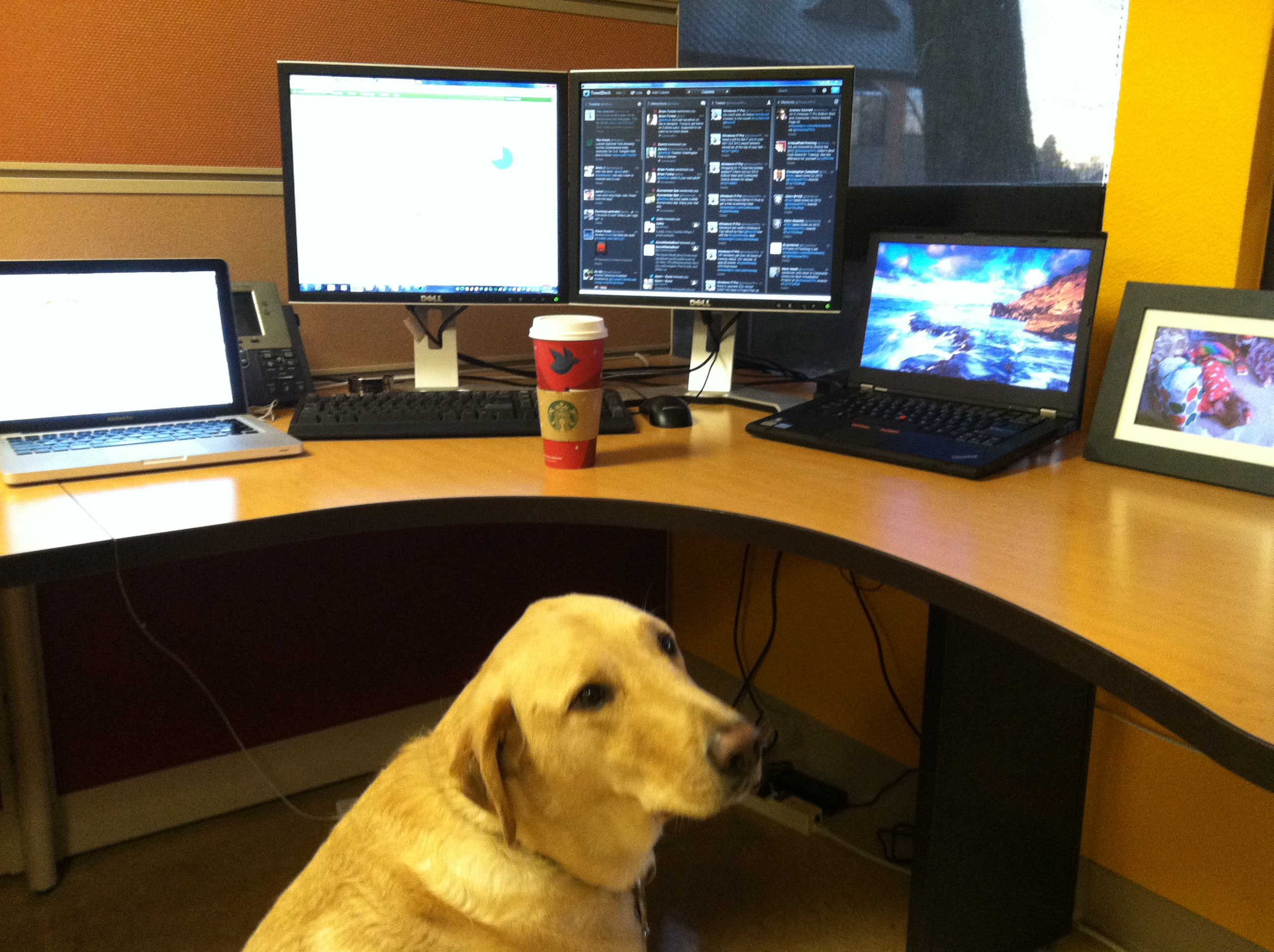 Dog Guard for Coffee